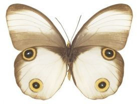 White Moth Mini Butterfly Vinyl Decal Sticker