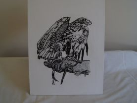 Hawk pen and ink drawing in