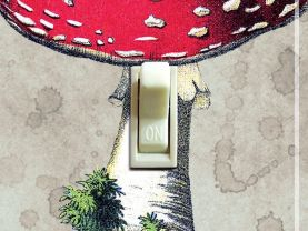 MUSHROOM Vintage Image Switch Plate (single)