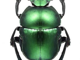 Beautiful Bright Metalic Green Beetle Vinyl Decal