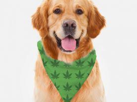 Marijuana Cannabis Design Pattern Dog Bandana